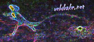 webdrake.net